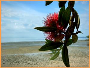 новости о рабочих визах новой зеландии